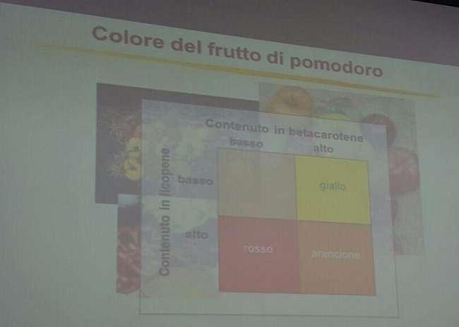 composizione colori pomodoro