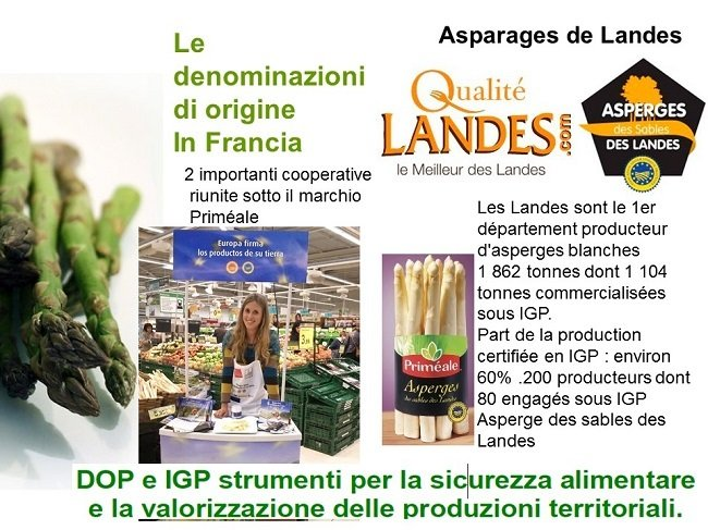 asparagi francia