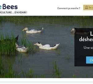 bluebees schermata homepage