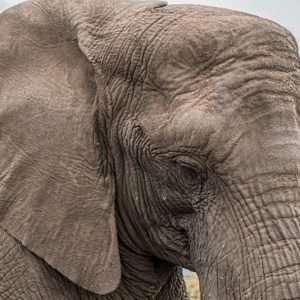 elefante e memoria