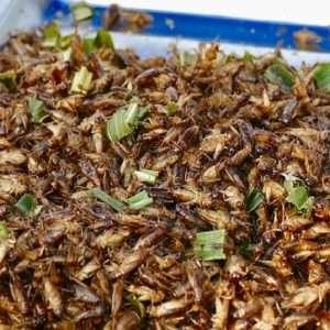 insetti commestibili food trend