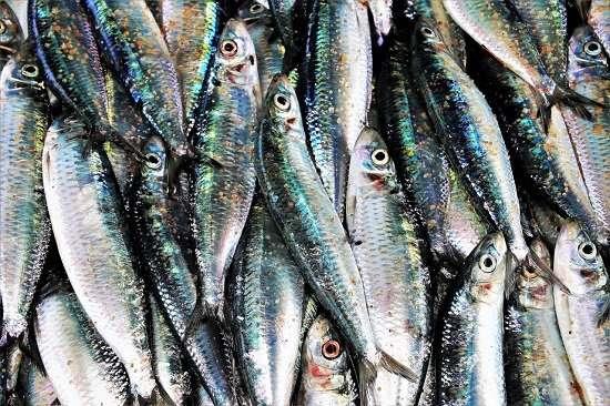 pesci azzurri dieta per la mente