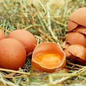 uova cibo per la mente
