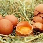 uova rafforzano il sistema immunitario